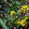 2020年 スケッチ4 野に咲く菊