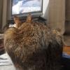 カレーリメイク カレードリア~晩御飯の記録~ダーウィンが来た~潜入!秘密のネコワールドを見る猫