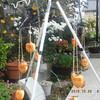 吊るし柿(大蜂屋柿)