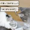 猫の病気 ~むくの去勢手術前検査~