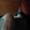ファルコンは猫の顔?、アニメ刀剣乱舞「続・花丸」
