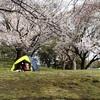 2021.3 平塚市総合公園 ~ 桜満開・わんぱく広場リニューアル ~