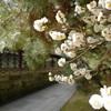 氏神様で早咲きの梅を昼と夜に@2020