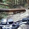 バイク登山! 梵天山展望台へ林道ツーリング