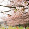 桜・走水水源地