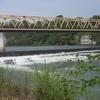 春の利根川