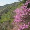 ツツジ咲くハチノス谷西尾根から行者尾根へ