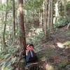 ヒノキの間伐 勉強 Thinning the cypress forest