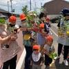 野菜の苗を植えました!🍅✨