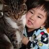 【猫あるある】 作業中かまってちょアピール