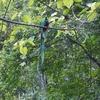 幸せを運ぶグアテマラの国鳥ケツァール~今日の1枚
