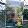 仙川の伊藤農園でミニトマト試食ツアーと摘み取り体験ができます!
