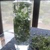 冷えとり的 朝イチに飲むのは、白湯 or 満月に収穫するハーブウォーター