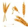小麦アレルギー判明の経緯その3