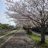桜も散りだした