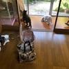 保護猫:若頭シロちゃん♂改めアンディ 緊急事態宣言解除直後の日曜日に富山の里親さんのもとへ ~プロジェクトCATの連載始まる~