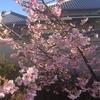 自分がどんな一年でも、桜は咲く。