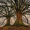 大樹の下は、、。