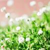 春の詩集・河井醉茗:そっと心に秘める青春の日々の記憶