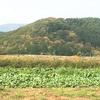 まほろば農園記③秋の実り編!