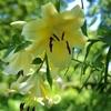 昭和記念公園のユリ、蓮の花など。