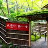 京都 青モミジ 平家物語の祇王寺