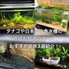 タナゴや日本淡水魚の底砂は何がおすすめ?厳選底床3選紹介!