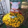 人気沸騰【サイボク】豚のテーマパークへ家族で行ってみた。