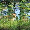 【旅行記】完全源泉かけ流し!ぬかびら温泉山籠荘へ行った時の話【北海道おすすめ温泉】