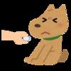愛犬と飼い主の知恵比べ