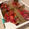 栃木【美土里農園】のイチゴ「とちおとめ」をお取り寄せして朝から幸せおうち時間🍓