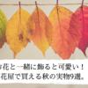 お花と一緒に飾ると可愛い!!花屋で買える秋の実物9選。