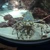 九州良か男化計画@沖縄旅は美ら海水族館が雰囲気よくて鬼楽しめたよの巻き!