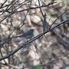 今日の鳥撮り 小春日和の鳥撮り 12.13