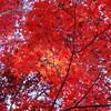 偕楽園、もみじ谷の紅葉