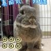 (●゚◇゚●) #真田丸 36話「勝負」感想!!◎◎◎◎◎◎