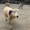 【栃木県那須町】入場料無料!子ども・カップルにおススメの南ヶ丘牧場