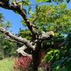 空の青いよよ伸ばして夏の庭(あ)