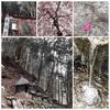 石鴨天満宮の桜模様