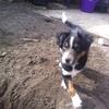 穴掘り好きの犬から畑を守る闘い(前編) これまでの遍歴と対策