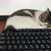 私が今まで使ってきたイラストソフトを私なりにレビューした記事を書いてみました。