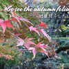 【Autumn leaves】Kiba Park @KIBA (East side of Tokyo)