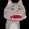 歯が痛いのは、歯ぎしりのせいだった!マウスピースを作ってみたよ。