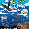 水族館でも出会えない! 海のビックリ生物展