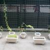 今月の家庭菜園のPV(Plants View)と収穫報告