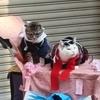 日本橋ストリートフェスタ2017で会った猫
