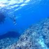沖縄での体験ダイビングのススメ