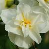 花・花・花 その2