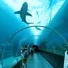 シンガポール旅⑩ 【ギネス記録】世界最大の海洋水族館S.E.A. AQUARIUM【シーアクアリウム】