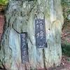 Wコースが素敵な都立戸山公園ラン(23区最高峰の箱根山に登頂!編)